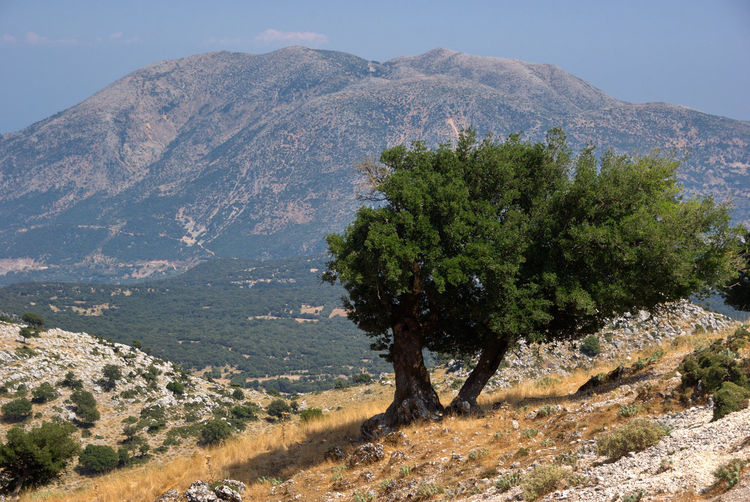 Panorama dal Monte Enos Mountain Scenics - Nature Plant Tree Landscape Environment Beauty In Nature Tranquility Tranquil Scene Nature Sky Mountain Range Day No People Land Non-urban Scene Outdoors Sunlight Growth Remote Mountain Peak Arid Climate Cefalonia Cefalonia Island Kefallonia Greece Greek Islands Greek Summer Greek Landscape Summer Island