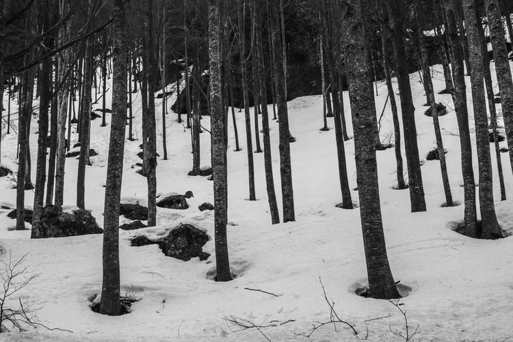 Italy in black and white. FILIPPI GIULIA PHOTOGRAPHY. Blackandwhite Branches Canon Cold Cold Temperature Day Forest Italy Landscape Light And Shadow Mountain Nature No People Outdoors Photographer Photography Scenics Snow Streetphotography Tranquility Tree Tree Trunk Wild Winter Wood