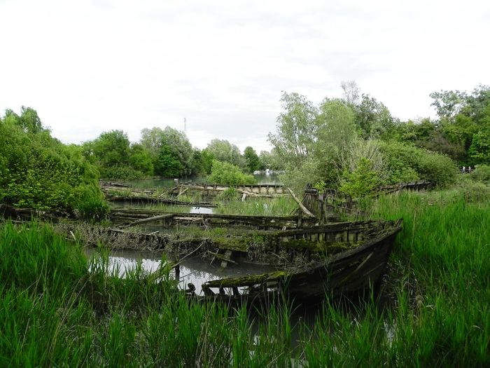 RePicture Growth Water Lagoon Old Boats Wrecked Silent Green Treviso Italy