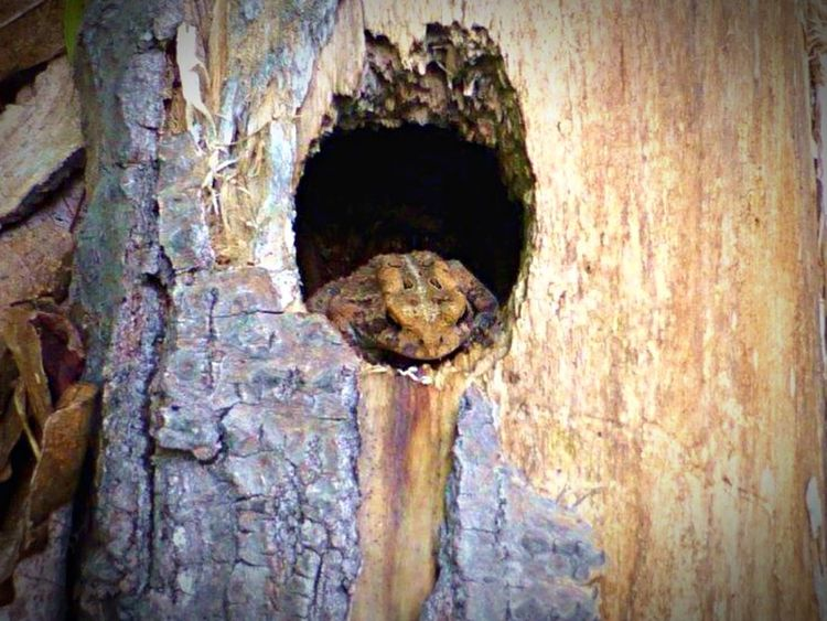Frog Trees Tree Trunk Nature Woods Animals Wildlife Color Photography SlateRun Pennsylvania Outdoors