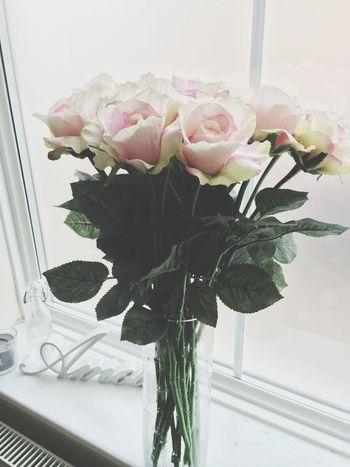 Pink Roses Flower Porn