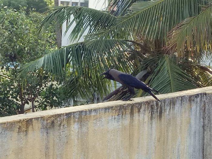 Bird Nature Taking Photos Alandur Chennai