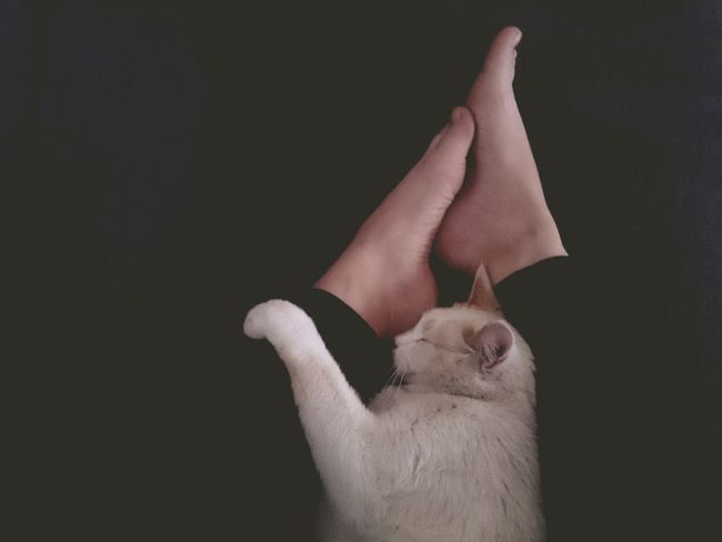 Me and the cat💕 Cat Cat Head Cats White Cat Friends Friendship Friend Homies Homie Couchsurfing Relaxing Trust True Love Relationship Feets Feet Home Life Home Is Where The Art Is Telling Stories Differently Tranquility Tenderness Love Hug Pet Showcase April Let's Go. Together.