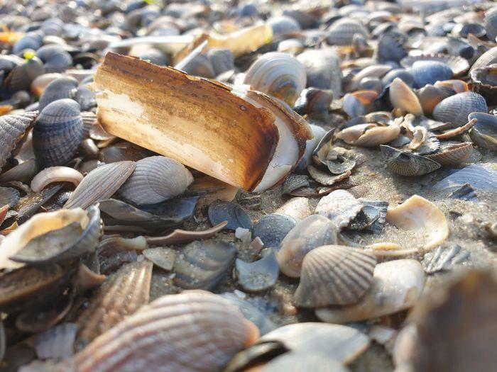 Close-up of seashells on pebbles