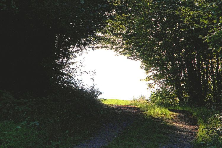 Out Of The Dark ... Forest Road Gegenlicht Naturelovers Backlight Out Of The Forest
