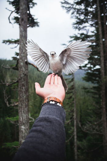 Cropped image of hand with bird