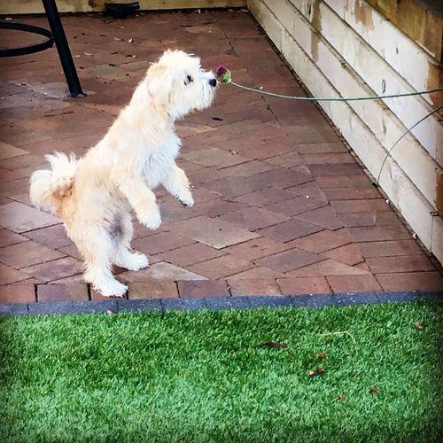Curious Pup Darcie 🐶🐾