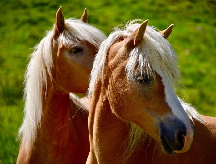 Close-up of horses standing outdoors
