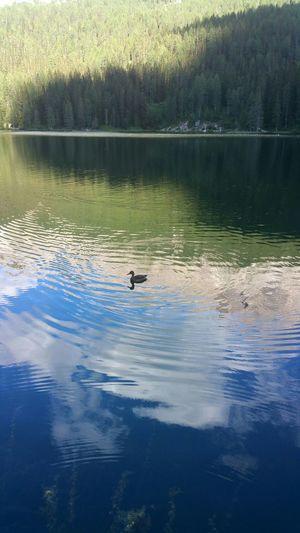 Lago Di Misurina Dolomiti Water Reflections Italy