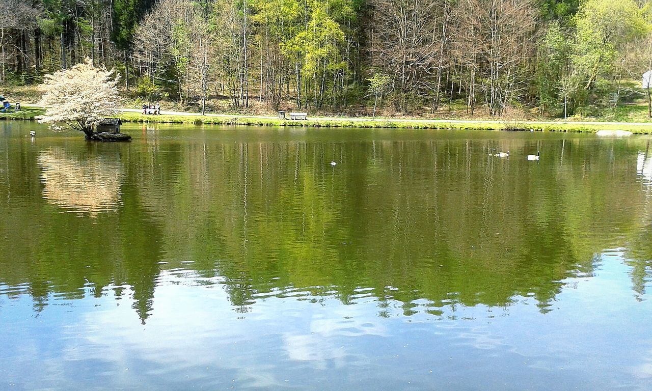 reflection, tree, lake, water, waterfront, nature, one animal, beauty in nature, day, outdoors, animal themes, no people, tranquil scene, tranquility, green color, growth, animals in the wild, bird