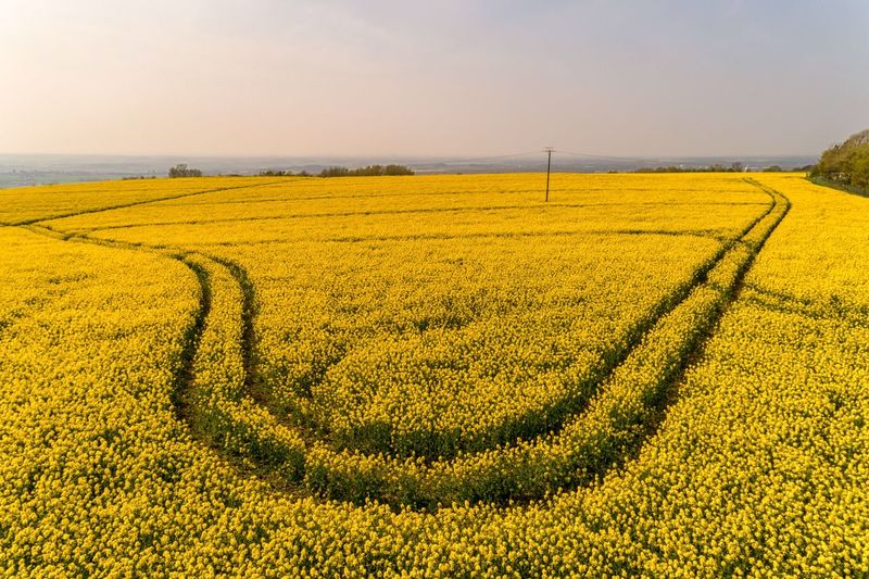 Rapeseed blossom Spring Billinge Spring Flowers Aerial View Aerial Photography Drone  Droneshot Drone Photography Drone View Farm Life Farming Rapeseed Flowers Rapeseed Blossom Rapeseed Rapeseed Field Agriculture Landscape Field Rural Scene Land Beauty In Nature Environment Oilseed Rape Flower Crop  Scenics - Nature Tranquil Scene