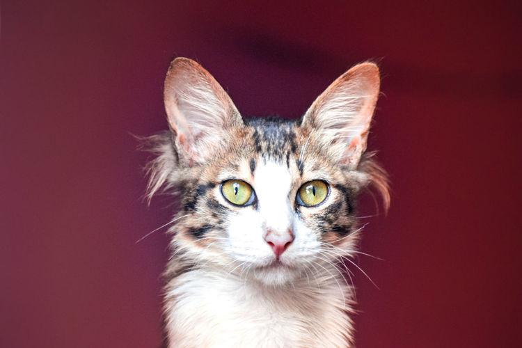 Cat eye vision of life