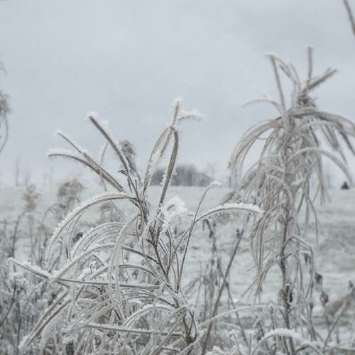 Showcase: November Frost Frosty It's Cold Outside