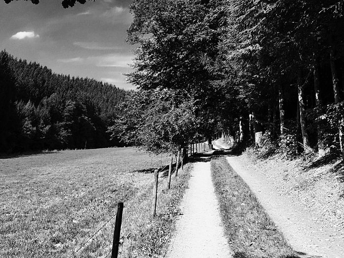 Promenade en Ardenne First Eyeem Photo