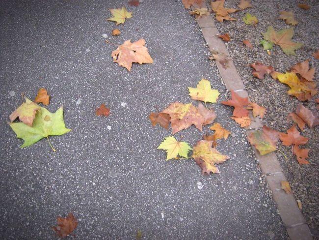 Leaves. Autumn Road Zagreb Enjoying Life Güzel Tutku Gezi Gezmeler Country Eye4photography
