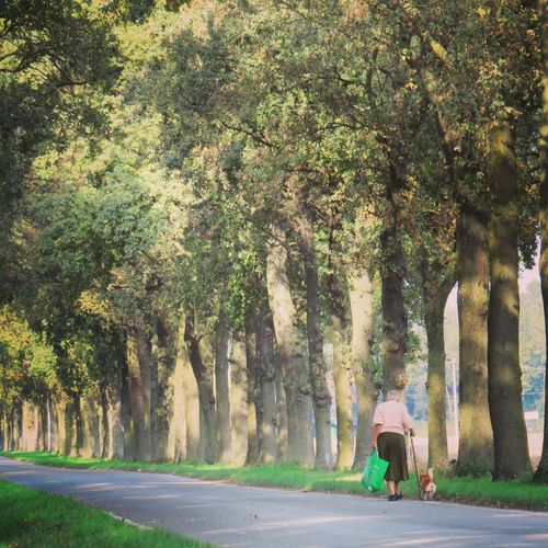 Senior Woman With Dog Walking On Road Amidst Trees