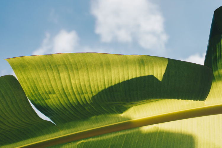 Low angle view of leaf against sky