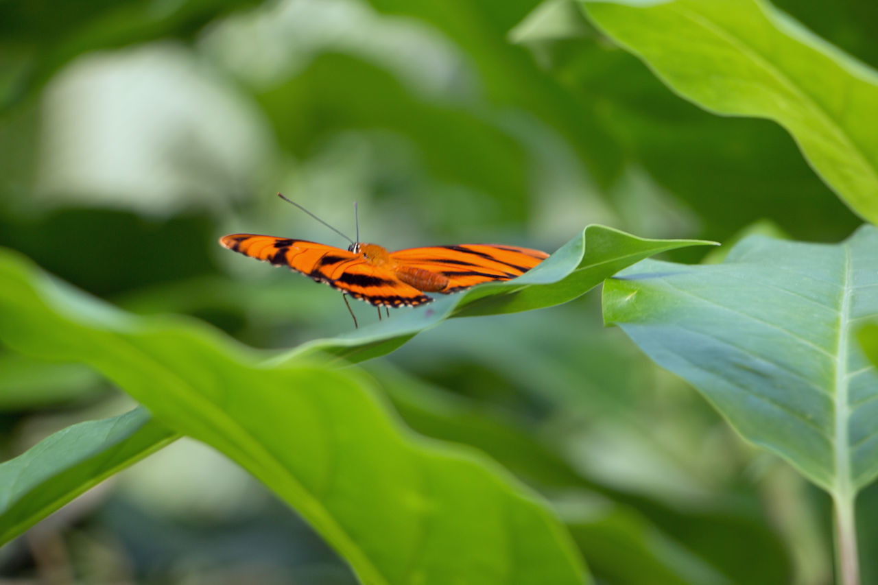 insect, one animal, animals in the wild, leaf, nature, green color, plant, growth, beauty in nature, day, fragility, outdoors, animal themes, animal wildlife, no people, petal, close-up, freshness, flower, flower head