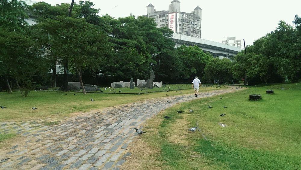 跑去躲雨的老爺爺 A Walk In The Park Taking Photos Bird Photography Bad Weather Rain