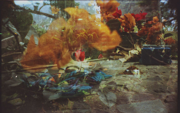 35mm Film Doble Exposición Dobleexposición Filmcamera Filmisnotdead Filmphotography Flower Collection Green Color Husky Husky Love Lomoblog Lomography Multi Colored No Edit/no Filter No Filter, No Edit, Just Photography Sardina Vibrant Color Cut And Paste