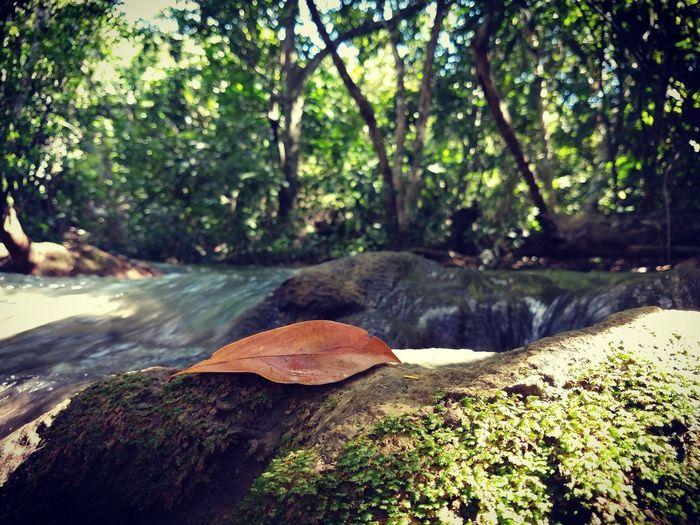 Bodoquena Tree Water Leaf Forest Stream - Flowing Water Watermill Water Wheel Hydroelectric Power Dam Reservoir Renewable Energy Flowing Moss Flowing Water Stream Water Pollution Growing Waterfall Countryside Mill Sewage Fallen Tree
