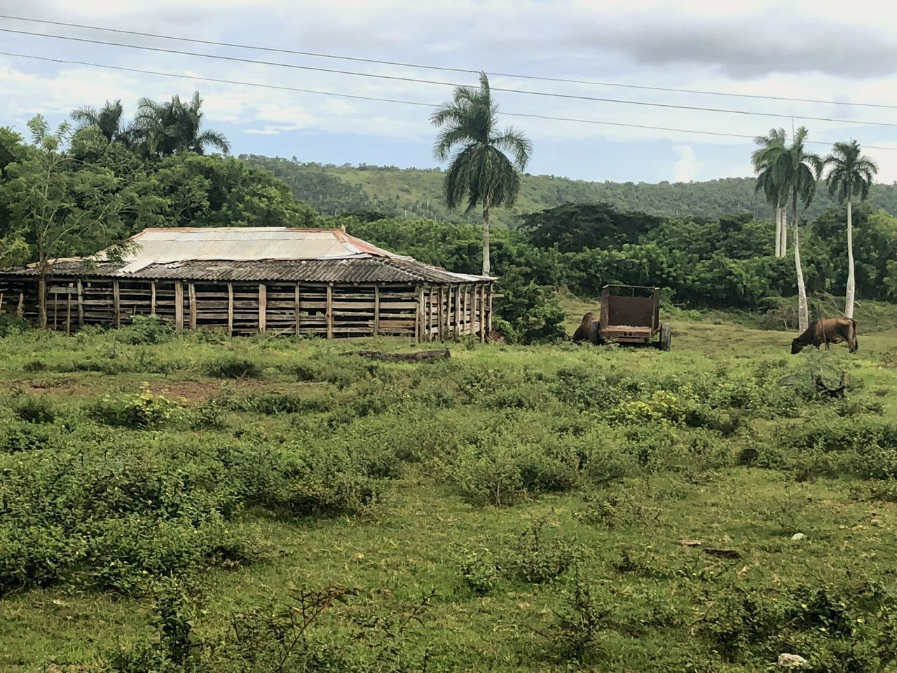 plant, tree, land, landscape, sky, field, nature, green color, architecture, built structure, no people, environment, growth, grass, day, house, rural scene, building exterior, building, non-urban scene, outdoors