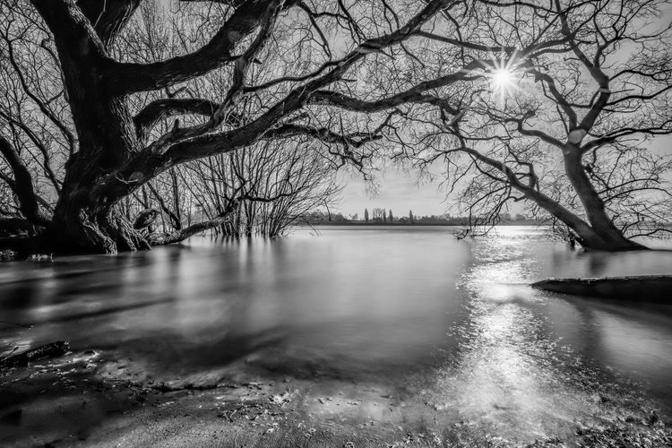 EyeEm Best Shots EyeEm Nature Lover EyeEmNewHere Reflection Rhein Bare Tree Beauty In Nature Black And White Blackandwhite Branch Cold Temperature Day Long Exposure Monochrome Nature No People Outdoors River Scenics Sky Tranquility Tree Water Waterfront Winter