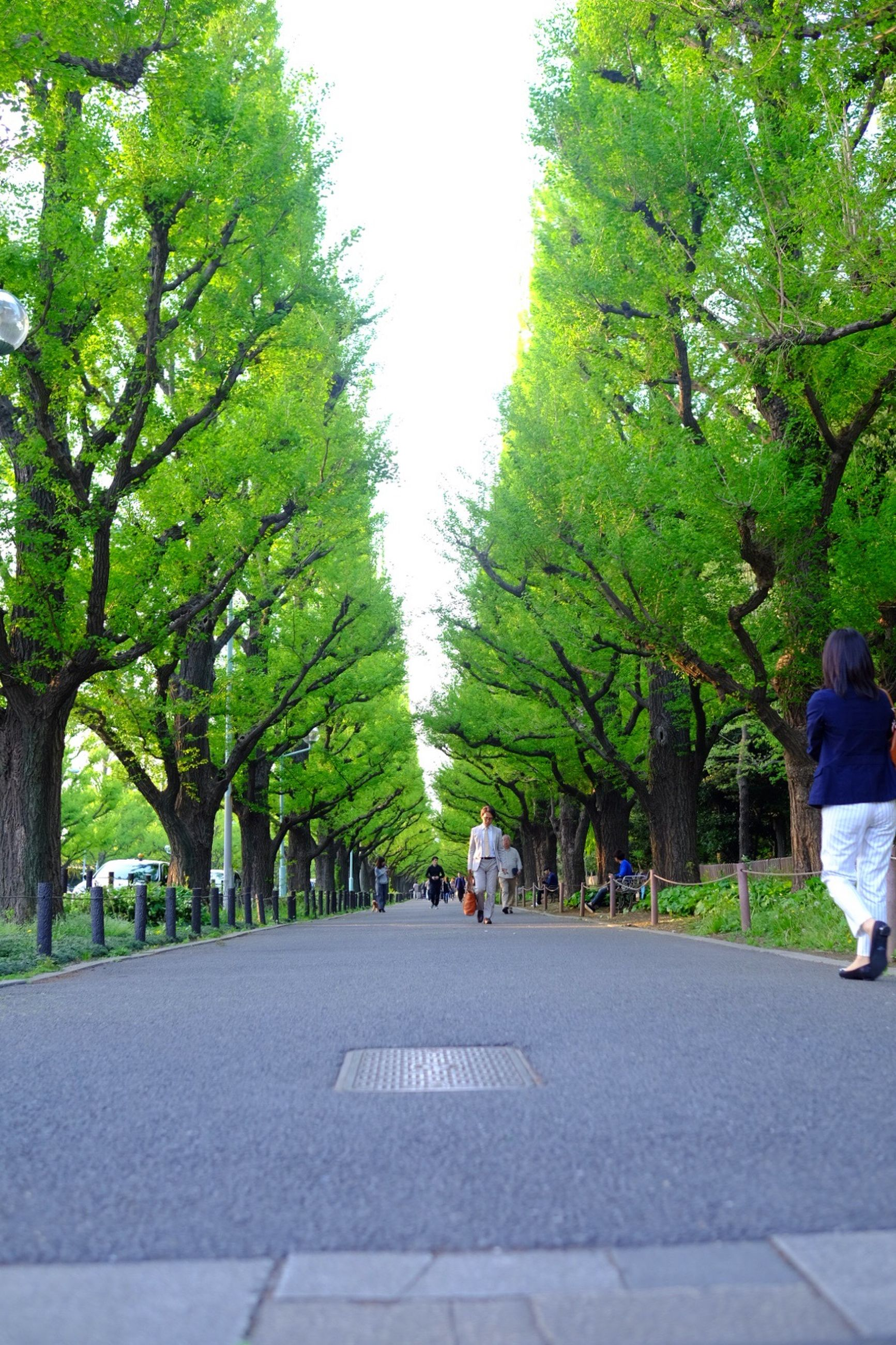 tree, men, person, lifestyles, leisure activity, walking, large group of people, the way forward, growth, park - man made space, clear sky, green color, rear view, group of people, footpath, medium group of people, treelined, day, park
