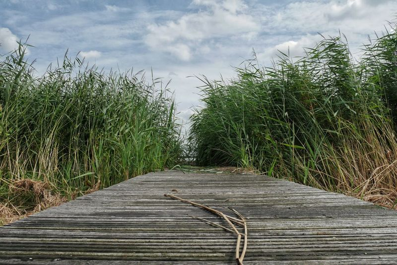 Sky Grass Path Pattern Nature Green Blue Clouds Clouds And Sky Landscape Outdoors Summer Day No People Low Angle View Ladyphotographerofthemonth Learn & Shoot: Balancing Elements Landscapes With WhiteWall