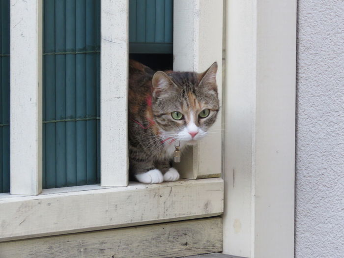 Cat in a hole Cat Pets Portrait Feline Collar Domestic Cat Looking At Camera Sitting Cute Whisker At Home Animal Eye Animal Face #urbanana: The Urban Playground