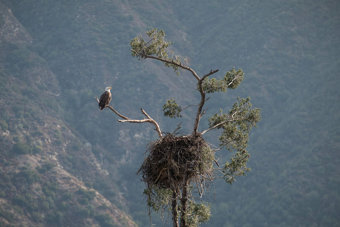Out of the nest... catching some rays. Nest Baldeagle Animal Themes Animal Wildlife Animals In The Wild Beauty In Nature Bird Branch Day Flower Growth Low Angle View Nature No People Outdoors Perching Sky Tree