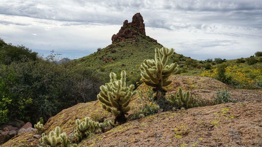 Desert plants on rocks against sky