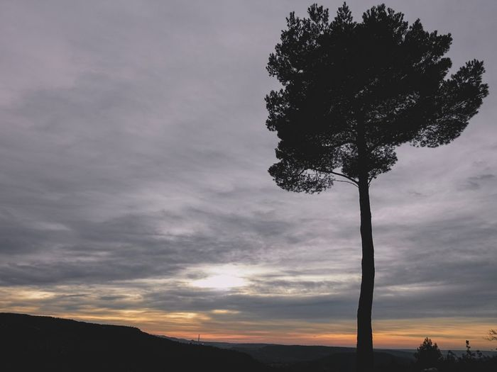 Tree Sky Nature Cloud - Sky Beauty In Nature Tranquility Sunset No People Outdoors Silhouette Scenics Landscape Single Tree Day Aix En Provence Provence Winter December Montagne Sainte Victoire