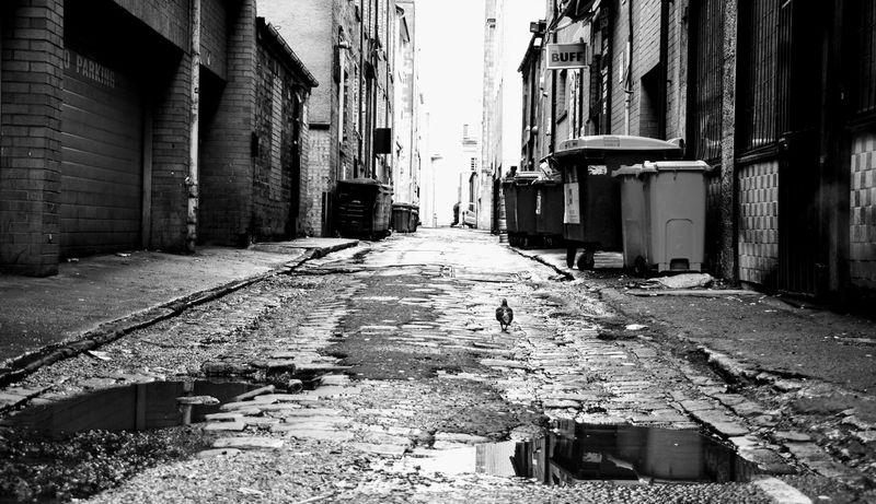 Glasgow  GLASGOW CITY Glasgow Streets Glasgow Central Dove In The City Dove - Bird Eyemphotos Eyem Street Blackandwhite BW_photography BW Collection Bw Photography Scotland