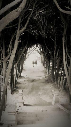 Portugal Portugaldenorteasul Portugal_em_fotos Portugalisbeautiful Canon Blackandwhite Pretoebranco Raizes Roots Of Tree Way Of Life Ways Caminhos  Under Calm