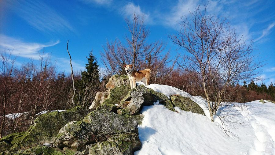 Low angle view of dog on rock formation against sky during winter