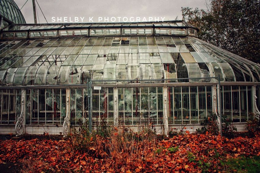 Old abandoned greenhouse 👌 Autumn Built Structure Architecture Abandoned Abandoned Buildings Outdoors No People Building Exterior Nature first eyeem photo