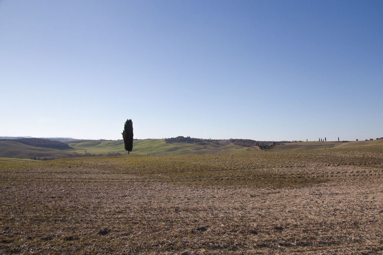 Sky Landscape Land Environment Field Nature Scenics - Nature Tranquil Scene Outdoors Copy Space Clear Sky Day Blue Tranquility Beauty In Nature Non-urban Scene Remote No People Distant Semi-arid Arid Climate Climate Crete Senesi Pienza Val D'orcia Tuscany Tuscany Hills Tuscany Countryside Cypresses Road