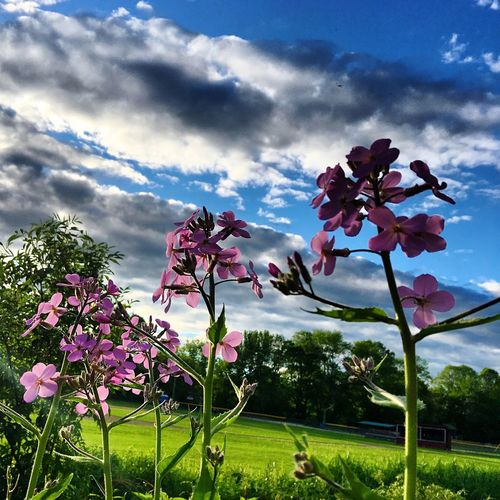 Flower Beauty In Nature Nature Growth Sky Cloud - Sky Fragility Petal Low Angle View Tree Day No People Freshness Outdoors Pink Color Plant Flower Head Blooming Close-up