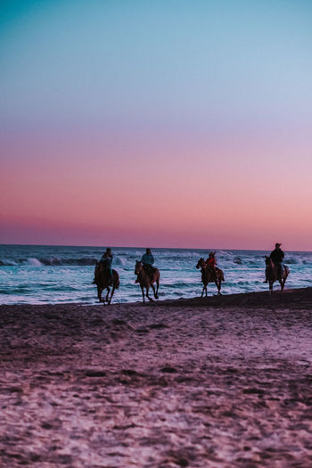 Silhouette people riding horses at beach against clear sky during sunset