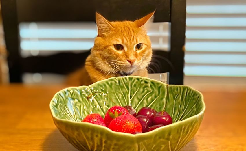 Cat in bowl on table