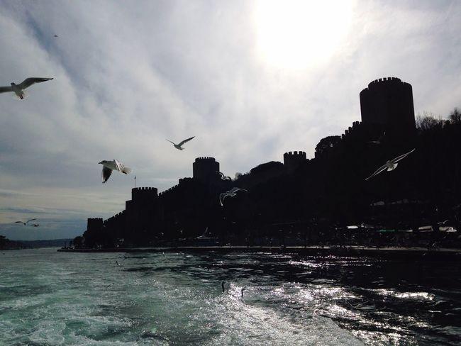 Castle Gull Sea Bosphorus Traveling