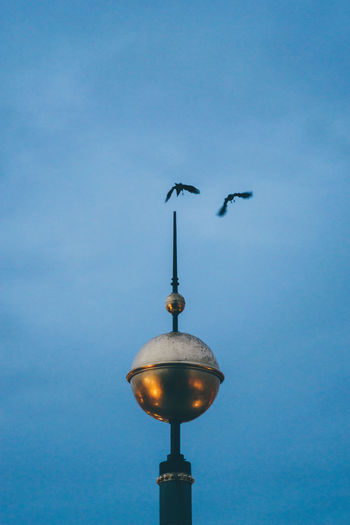 Sky Low Angle View Architecture Street Light No People Lighting Equipment Bird Street Built Structure Vertebrate Clear Sky Animal Themes Animal Building Exterior Animal Wildlife Nature Animals In The Wild Dusk Blue Spire  Outdoors Seagull