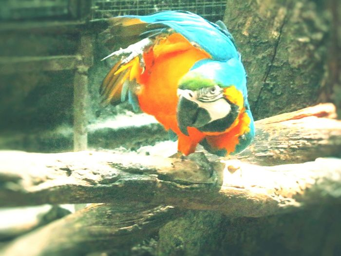 Bird Birds_collection Birds Of EyeEm  Bird Photography Animals EyeEm Gallery In Samutprakan Thailand