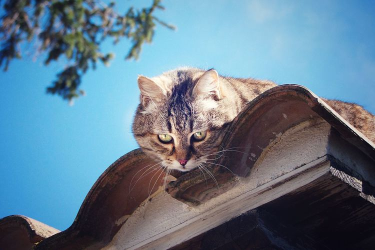 Low angle portrait of cat against sky