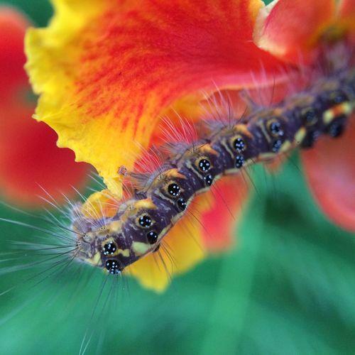 Macro #macrogardener #macrooftheday #macrophotography #macromania #papamacro Olloclip #fisheye #fisheyelens #nofilter #natureza #flor #céu #nuvem #flower #sky #cloud #nature
