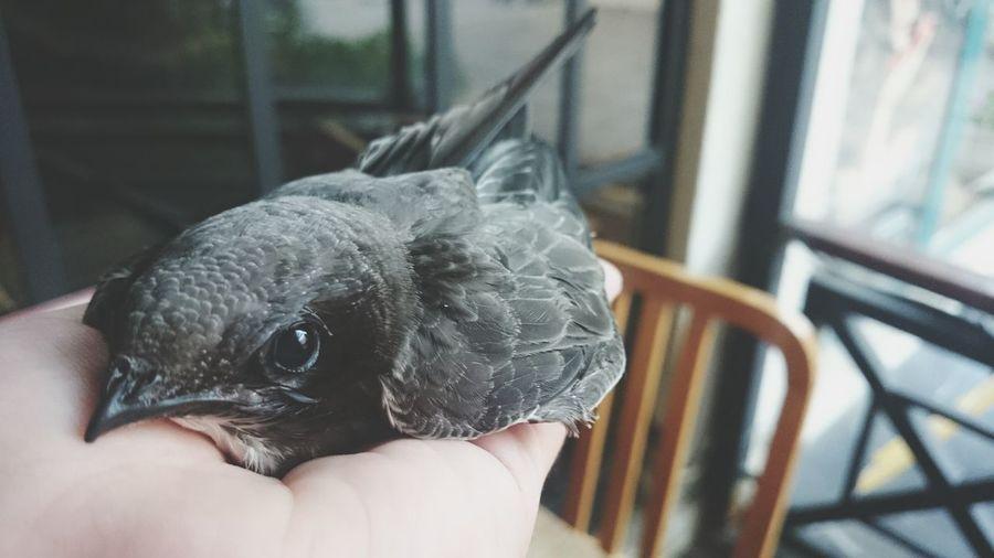Hello World Ebabil Bird Bird Photography
