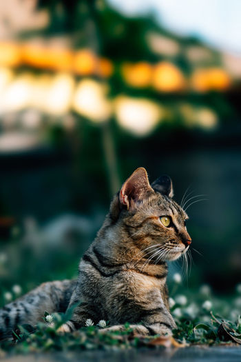 Cat relaxing on land