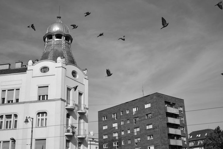 Low angle view of seagulls flying in building against sky