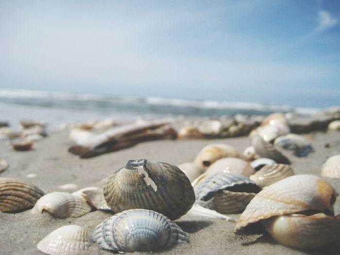 Surface level shot of seashells on shore against sky